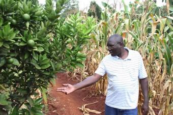 Joseph Analyzes Orange Trees Outside Jinja